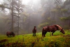 ZALDIAK 5 (juan luis olaeta) Tags: paisajes landscape fog foggy forest bosque basoa nieblas laiñoa natura altugana canon photoshop lightroom