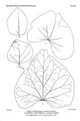 beitrgezurpal02wien_0209 (kreidefossilien2) Tags: velenovský bohemiancretaceousbasin bohemian czech republic palaeobotany flora kieslingswalde