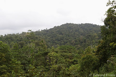 View across the C.R.A.R.C Guayacán reserve (edward.evans) Tags: forest guayacánrainforestreserve guayacan crarc siquirres costarica rainforest wildlife nature centralamerica latinamerica costaricanamphibianresearchcenter