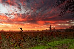 Vignes en Automne 2018 (fredf34) Tags: vignes landscape paysage nuages clouds vines agde pentax pentaxk3 k3 hdpentaxda1685mmf3556eddcwr leverdesoleil sunrise automne fredfu34 fredf34