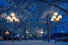 Blue hour alley (ralfkai41) Tags: ngc lichter schnee winter blauestunde sweden outdoor allee kalt dusk lights alley dämmerung bluehour cold evening schwedem stockholm abend bäume snow trees