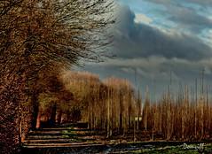 De nuages et d'or (DOMVILL) Tags: domvill wwwflickrcompeoplevildom paysage
