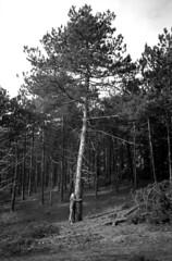 Little Tree Hugger (selyfriday) Tags: selyfriday wwwnassiocomempty nassiocom 35mm olympusxa1 olympus analogue kodak400 tmax400 expired rodinal 125 20˙c 7minutes nederland dutch holland schoorl treehugger pine