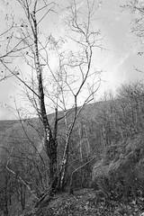 Hiver en noir et blanc (LOLODUTERRIER) Tags: arbre forêt noir blanc bois france ciel
