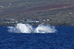 DSC_0574 (Don Holmgren) Tags: hawaii kohalacoast humpbackwhales whales breach