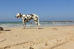 On the seashore (unicorn7unicorn) Tags: море пляж песок собака тренога мандарин волны камни тень ракушки wah 365the2019edition 3652019 day65365 06mar19