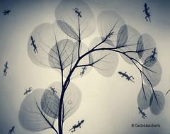 """The tree of dreams"" (carlomarchetti62) Tags: carlomarchetti photography art artstudio animals artgallery beauty contemporaryart dream empathy forest freedom feel geckos heart intothewild infinity insideout love light life landscape lifestyle nature present peace tree soul spirituality world"