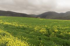 verde y mas (Jesús E.) Tags: landscape nube naturaleza viaje travel jaén españa