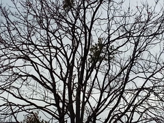 Branches Of A Tree. (dccradio) Tags: lumberton nc northcarolina robesoncounty outdoor outdoors outside nature natural fitnesscenter sky overcast cloudy clouds greysky graysky branch branches treebranch treebranches treelimb treelimbs tree trees winter february tuesday tuesdaymorning morning goodmorning samsung galaxy smj727v j7v cellphone cellphonepicture photooftheday photo365 project365