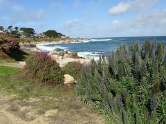 IMG_3193 (mudsharkalex) Tags: california pacificgrove pacificgroveca