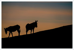 In buone mani (Outlaw Pete 65) Tags: cielo sky nuvole clouds tramonto sunset luce light asini donkeys colori colours natura nature montagna mountain fujixe3 fujinon55200mm sulzano lombardia italia