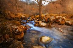 Fairy forest (juansánchez.) Tags: forest magicforest landscape photographylandscape river magicnature fairy nature autumn otoño paisaje bosque bosquemagico rio