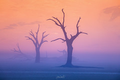 Maleficent (Hilton Chen) Tags: tonalcontrast sossusvlei silhouettes foggy sunrise sanddunes namibia mist camelthorntrees deadvlei landscape ethereal namibdesert colorcontrast namibnaukluftnationalpark hardapregion na