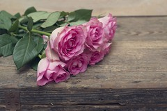 I Will Tell You The Truth About Flower Meanings In The Next 17 Seconds   flower meanings (franklin_randy) Tags: flower meanings chart death lily love peony strength tattoo uk wiki with pictures