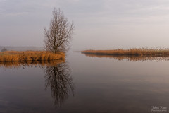 A Moment of Stillness (Johan Konz) Tags: serene morning misty landscape water tree reed sky sunrise reflection outdoor mist serenity waterscape purmerland netherlands creek stillness