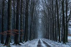 09012019-DSC_0012 (vidjanma) Tags: allée hêtres forêt hiver neige