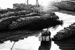Logs (norm_p) Tags: logs mono wood export timber fujifilm newzealand