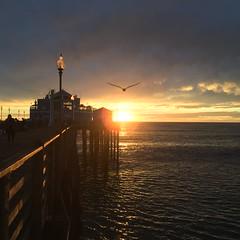 Oceanside Pier (hinxlinx) Tags: oceanside pier seagull bird flying