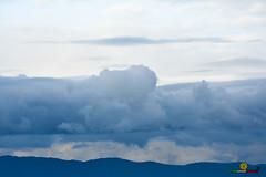 A-LUR_3121 (OrNeSsInA) Tags: taly passignano panicale natura panorami campagma campagna landescape trasimeno nikon canon airone airon cormorano spettacolo birdwatching albero cielo animale mare acqua uccello