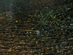 jinbanotaki1 (Hironori Akutagawa) Tags: japan shizuoka fujinomiya jinbanotaki panasonic lumix g9pro dcg9 olympus mzuiko 1240mm f28 pro