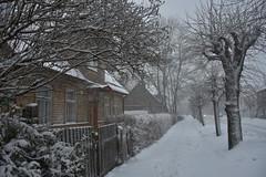 Tuisk Rakveres (anuwintschalek) Tags: nikond7200 18140vr eesti estland estonia rakvere talv winter january 2019 schnee snow snowfall tuisk schneesturm schneefall lumi lumesadu tänav street strasse