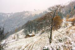 la prima neve ... (Roberto Defilippi) Tags: 2019 32019 rodeos robertodefilippi natura nature neve snow first autunno autumn tmpanel montagna mountain