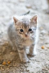 Sweet baby kitten (Christy Turner Photography) Tags: kitty kitten kitteh cats cat meow feline tiny baby purr kittens felins felines gatto chat