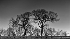 At the roadside (reflection) (andzwe) Tags: vangrail snelweg bomen paar duo reflectie kanaal canal havelte netherlands reflection nederland drenthe panasonicdmcgh4 blackandwhite monochrome frame zwartwit silhouette grainy gruizig guardrail darkness duisternis trees highway roadside berm
