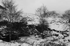 Winterscape (steve_whitmarsh) Tags: aberdeen scotland scottishhighlands highlands mountain hills bw monochrome blackandwhite winter snow ice trees cairngorms
