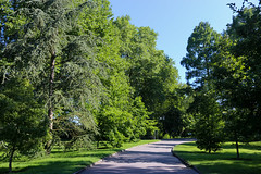 Vacances_0808 (Joanbrebo) Tags: mainau garden jardín jardí park parque parc konstanz badenwürttemberg deutschland de canoneos80d eosd efs1855mmf3556isstm autofocus arbol arbre tree