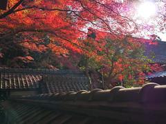 京都山科毘沙門堂 (Eiki Wang) Tags: 京都 山科 yamashina 毘沙門堂 kyoto