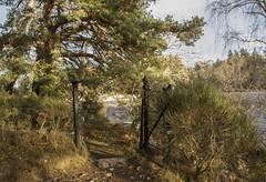 Gateway to the river Dee (bev glint) Tags: aboyne river dee riverdee gate trees aberdeenshire scotland