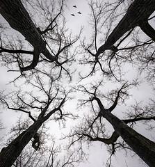 Leypark Bomen sprookje