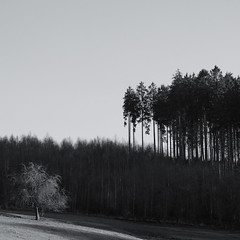 some trees (Werner Schnell Images (2.stream)) Tags: ws trees