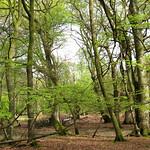 New Forest NP, Hampshire, UK thumbnail