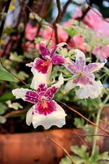108. Arboretum flower shower (Misty Garrick) Tags: arboretum universityofminnesotalandscapearboretum landscapearboretum flowershow