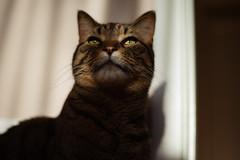 DSC06585-1 (iocatco) Tags: cat kitten cats sony a7