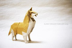 Siberian Husky designed by Fumiaki Kawahata (Sunny^o^) Tags: origami origamidog siberianhusky fumiakikawahata husky sunny'sorigami
