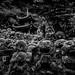 0001_zoriah_photojournalist_war_photographer_temple_20190304_1811
