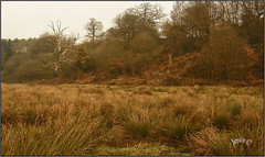 The Winter Marshes . (Picture post.) Tags: landscape nature green winter trees marsh sedge paysage arbre