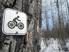 Cross Country Cycling (Mr. Happy Face - Peace :)) Tags: htmt trees forest snow sun cloud sky trail skiing outdoors activity winter nature hiking art2019