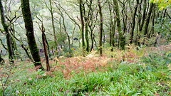 River Lyn below wooded gorge 2018-10-13 14.40.36 - edited annotated (Amelia J Hoskins) Tags: trees riverlyn gorge ferns exmoor