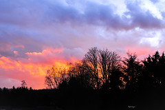 Esplosione.... (kiareimages1) Tags: sunsets winter clouds trees colors landscapes belgium charleroi wallonie marcinelle paysnoir