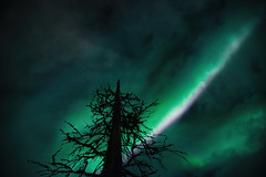 Tree (Björn Knif) Tags: evergreen tree sky clouds northernlights auroraborealis finland