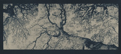 oak above (lawatt) Tags: oak tree altprocess cyanotype wares toned hahnemuhleplatinumrag