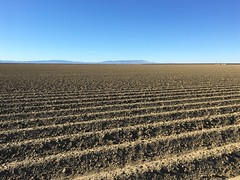 Kings County Corduroy (Dan Brekke) Tags: california kingscounty sanjoaquinvalley centralvalley farms agriculture westlands westlandswaterdistrict