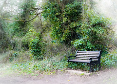 Come - sit a while... (judy dean) Tags: judydean 2018 stowonthewold seat bench trees roadside 52in2019 14somewheretosit