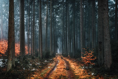 February VI (der_peste (on/off)) Tags: forest woods woodland timberland trees mist fog mood moody atmosphere haunted lurky murky winter sombre