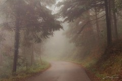 Foggy road (jorgeverdasca) Tags: mist fog trees nature landscape woodland road path forest sintra portugal