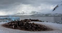... Neko Harbour, penisola antartica (04) ... (Felice_Miccadei) Tags: flickrunitedaward